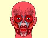 Dibujo Músculos de la cara pintado por ru_82
