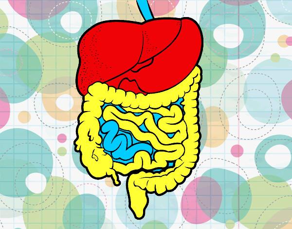 Dibujo Aparato Digestivo Para Colorear Imprimir: Dibujo De Sistema Digestivo Pintado Por Sinaiv En Dibujos