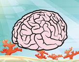 Dibujo Cerebro pintado por cristian_3