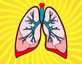 Dibujo Pulmones y bronquios pintado por SinaiV