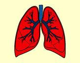 Dibujo Pulmones y bronquios pintado por nazaaaaaaa