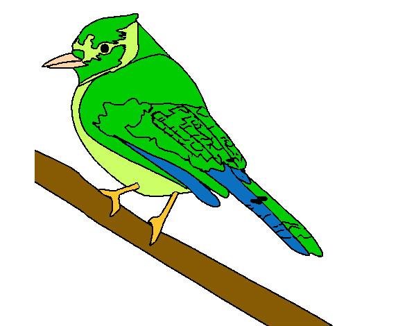 Dibujo de Pjaro tropical pintado por Lirioreus en Dibujosnet el