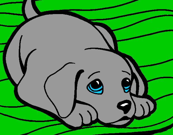 Dibujo de perrito tierno pintado por Thiagitoo en Dibujosnet el