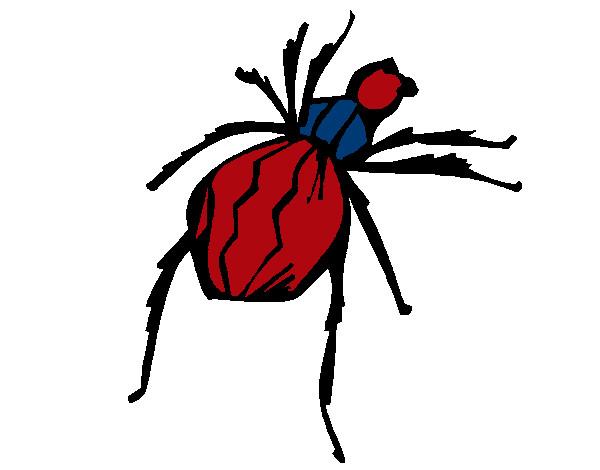 Dibujo de Araña viuda negra pintado por Natygm24 en Dibujos.net el ...