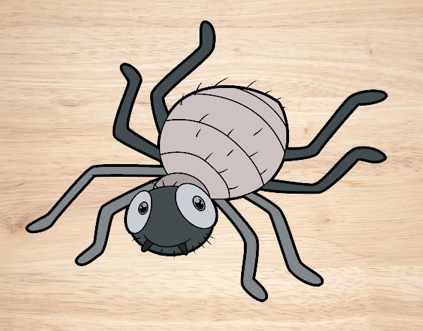 Araña infantil