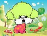 Cachorro de poodle