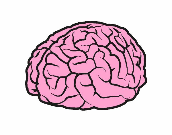 Dibujo De Cerebro Pintado Por En Dibujos.net El Día 18-04
