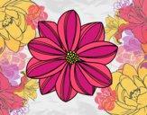 Dibujo Flor de margarita pintado por nmr5461