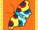Mariposa 11