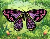 Dibujo Mariposa alexandra pintado por queyla