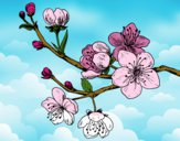 Dibujo Rama de cerezo pintado por isita_mgb
