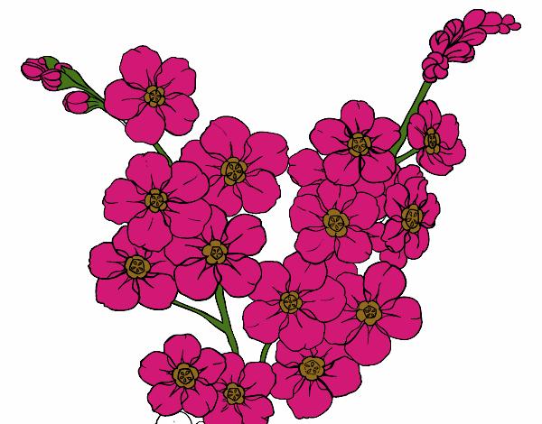 Dibujo De Flor De Cerezo Para Colorear: Dibujo De Flor De Cerezo Pintado Por En Dibujos.net El Día