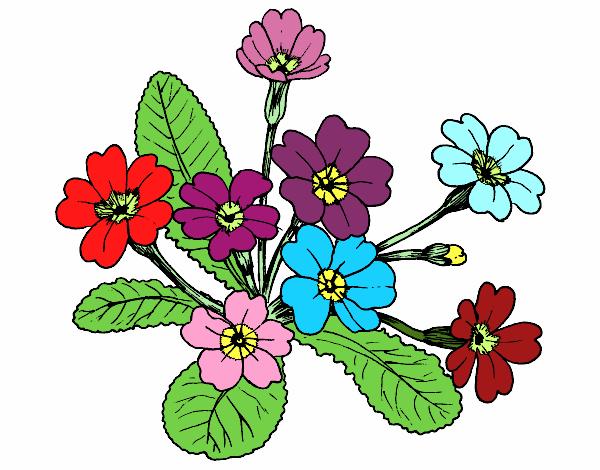 Flores En Dibujo A Color