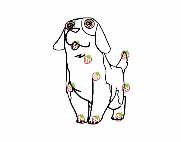 Dibujo De Perro San Bernardo Joven Para Colorear Dibujos Net