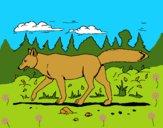 Dibujo Coyote pintado por LunaLunita