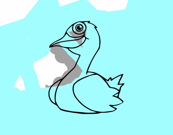 un pato: