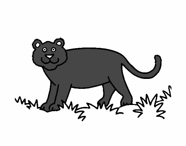 Dibujo De Pantera Pantera Colorear Dibujos Top Como: Dibujo De Pantera Pintado Por En Dibujos.net El Día 02-10