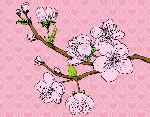 Dibujo De Una Rama De Flores De Duraznos. Pintado Por En