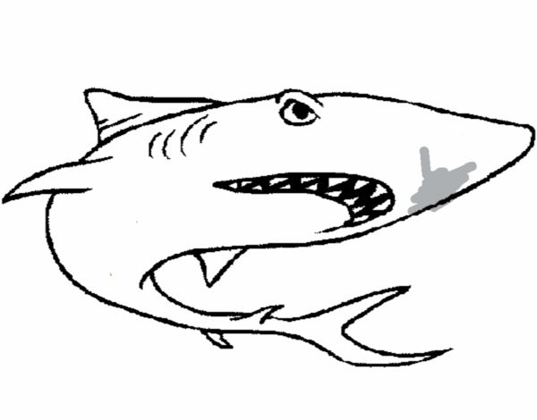 dibujo de tibur u00f3n pintado por en dibujos net el d u00eda 19