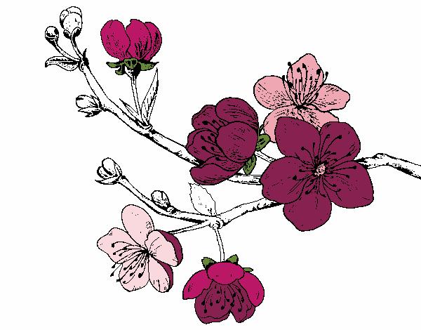 Dibujo De Flor De Cerezo Para Colorear: Dibujo De Rama De Cerezo Pintado Por En Dibujos.net El Día