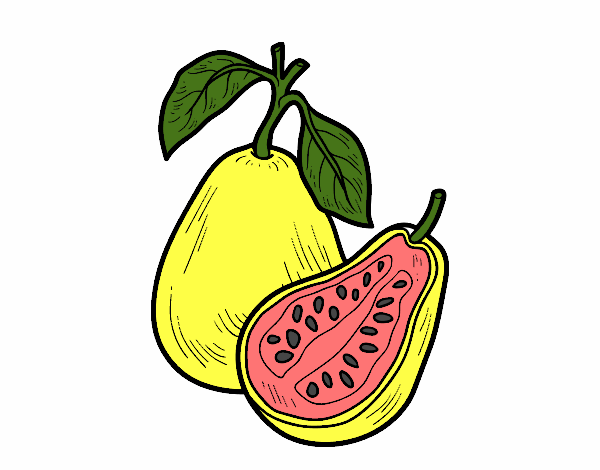 Dibujo de Fruta extica guayaba pintado por en Dibujosnet el da