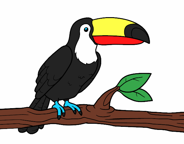 Dibujo De Tucanes Lindos .com Pintado Por En Dibujos.net