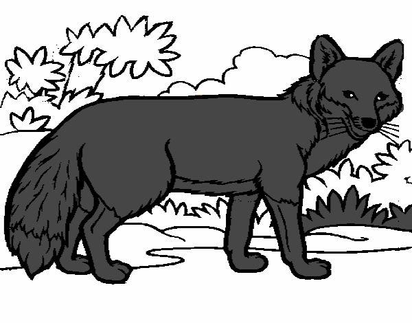 Zorro Animal Dibujo