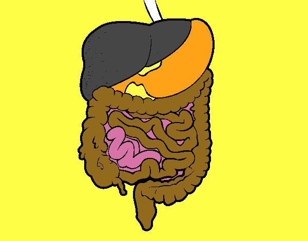 Dibujo Aparato Digestivo Para Colorear Imprimir: Dibujo De Sistema Digestivo Pintado Por En Dibujos.net El
