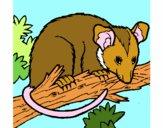 Dibujo Ardilla possum pintado por dandanhooo