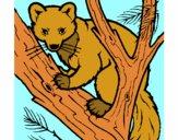 Dibujo Marta europea en el árbol pintado por dandanhooo