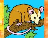 Dibujo Ardilla possum pintado por meibol