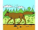 Dibujo Coyote pintado por dandanhooo