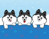 Dibujo 3 perritos pintado por kiu89