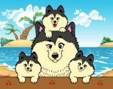 Dibujo Familia Husky pintado por kiu89