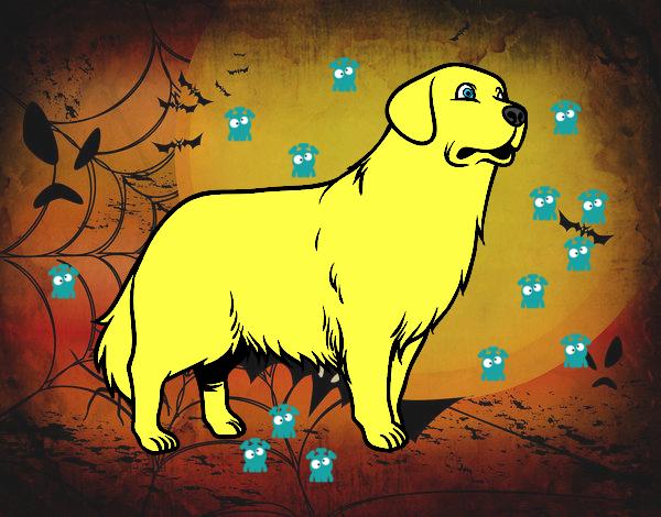 el perro Max es baliente en halloween a media noche