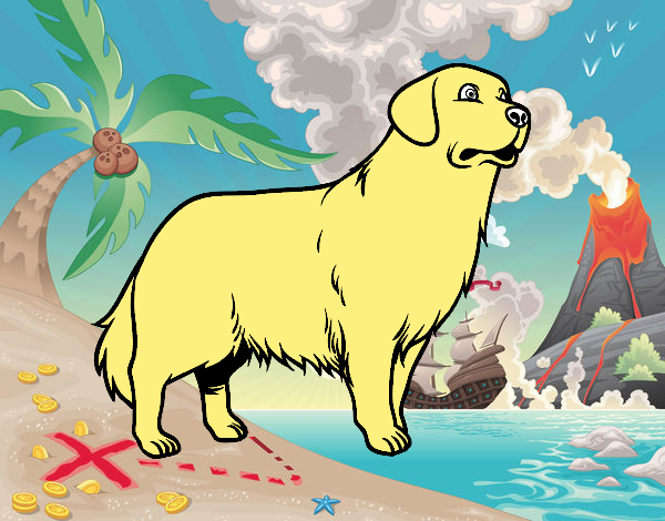 el perro mas lindo