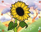 201712/un-girasol-naturaleza-flores-10963430_163.jpg