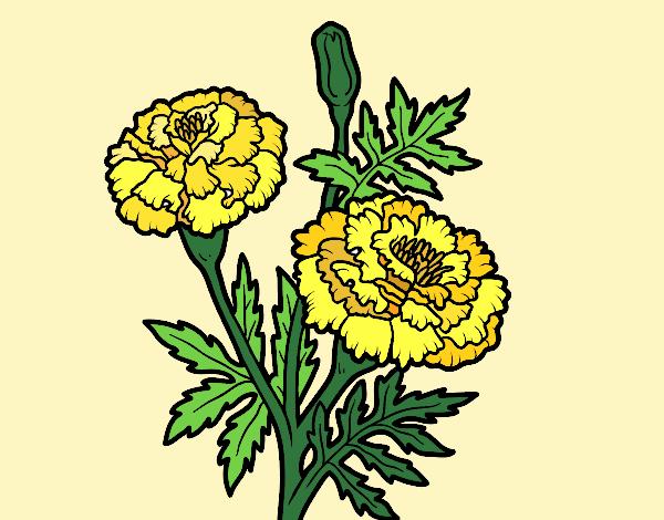 Dibujo Flor de las maravillas pintado por Ytap