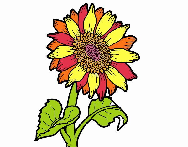 Dibujo De Girasol De Colores Pintado Por En Dibujos.net El