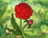 Dibujo Peonia pintado por alba1345