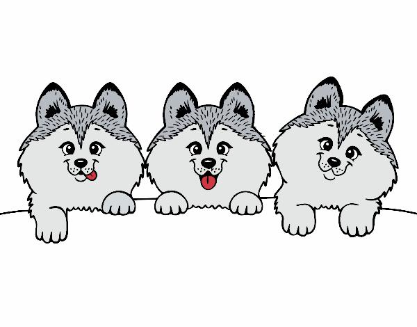 Dibujo De 3 Perritos Pintado Por Viki820 En Dibujosnet El Día 11 07