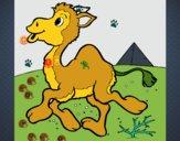 Camello 1
