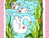Dibujo Cisnes pintado por Fatimaterr
