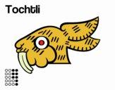 Los días aztecas: el conejo Tochtli