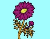 Dibujo Margarita silvestre pintado por alex80