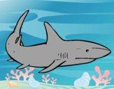 Dibujo Un tiburón nadando pintado por fact