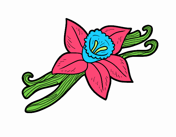 Dibujo de flor vainilla pintado por en Dibujosnet el da 190917