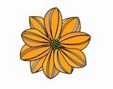 Flor de margarita