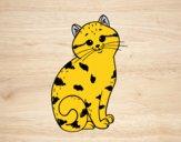Gatito encantador