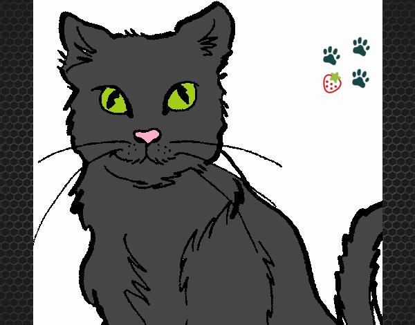 Dibujo De Chat Noir Pintado Por En Dibujos.net El Día 19